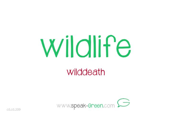 2019-03-03 - wildlife
